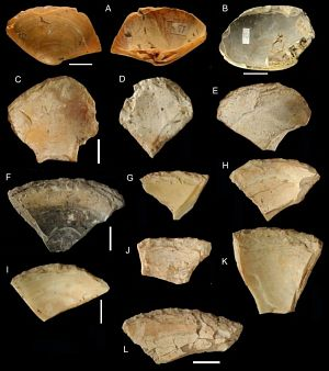 General morphology of retouched shell tools