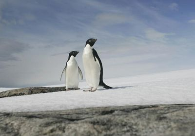 A pair of Adélie penguins are pictured at Cape Denison, Commonwealth Bay, East Antarctica