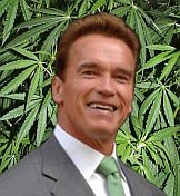 """That is not a drug. It's a leaf,"" Schwarzenegger says"