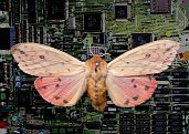 cyborg moth spy on terrorists as it flits over Amiga 3000 motherboard