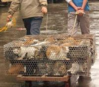 Terrified cats crammed tightly into cages are hauled off to a meat market in Guangzhou