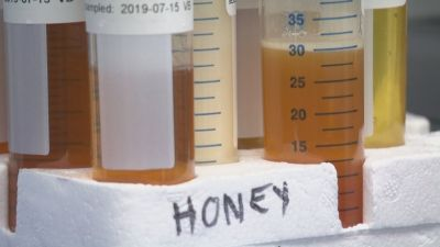 Canadian Food Inspection Agency found loads of fake honey cut with cheap syrup imported as 'pure honey'