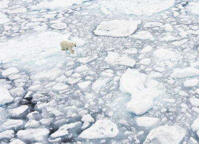 ice melt and polar bear has no where to go